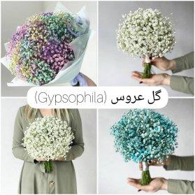 گل عروس در رنگهای متنوع