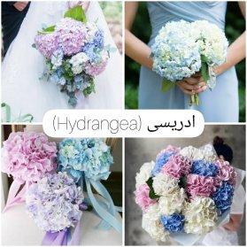 گل ادریسی برای دسته گل عروس