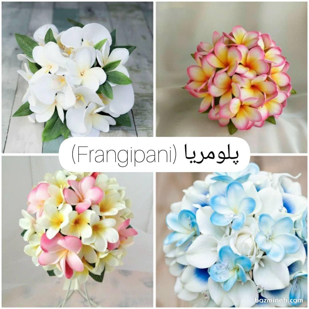 رنگهای مختلف دسته گل عروس با گل پلومریا